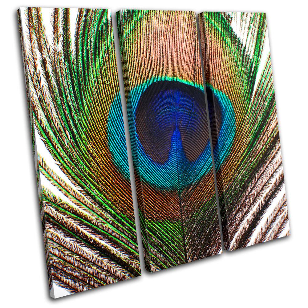 Animals Peacock Feathers TREBLE CANVAS WALL ART Picture Print VA