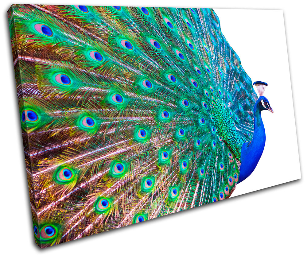 Peacock Feathers Animals MULTI CANVAS WALL ART Picture Print VA